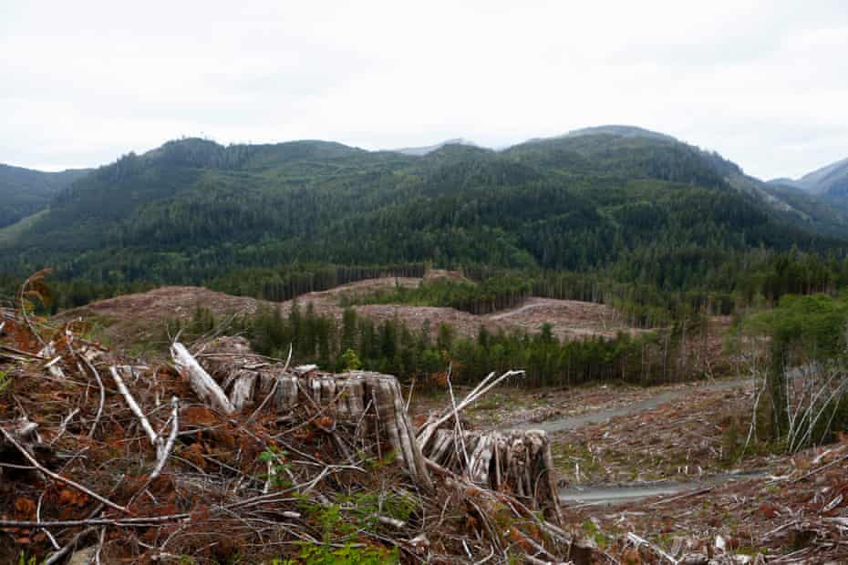 A series of clearcuts are seen on a mountain side near the Fairy Creek watershed on southern Vancouver Island.