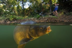 French photographer and biologist Laurent Ballesta captures the hour- long battle between a 15kg (33lb) carp and his brother at a small lake near Montpellier in southern France.