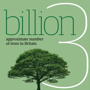 Infographic: 3 billion, the approximate number of trees in Britain