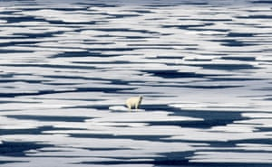 A polar bear stands on the ice in the Franklin Strait in the Canadian Arctic archipelago
