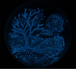 Night of the Vibrio by Laura Bryan, Sara Lawhon and Sara V Little of Texas A&M University