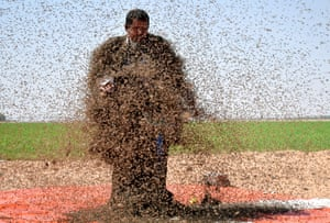 Tabuk, Saudi Arabia A man with his body covered with bees poses for a picture in Tabuk