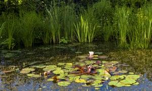 Bennett captures an enchanting world in Pond