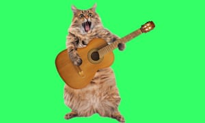 Furry cat strumming guitar and singing