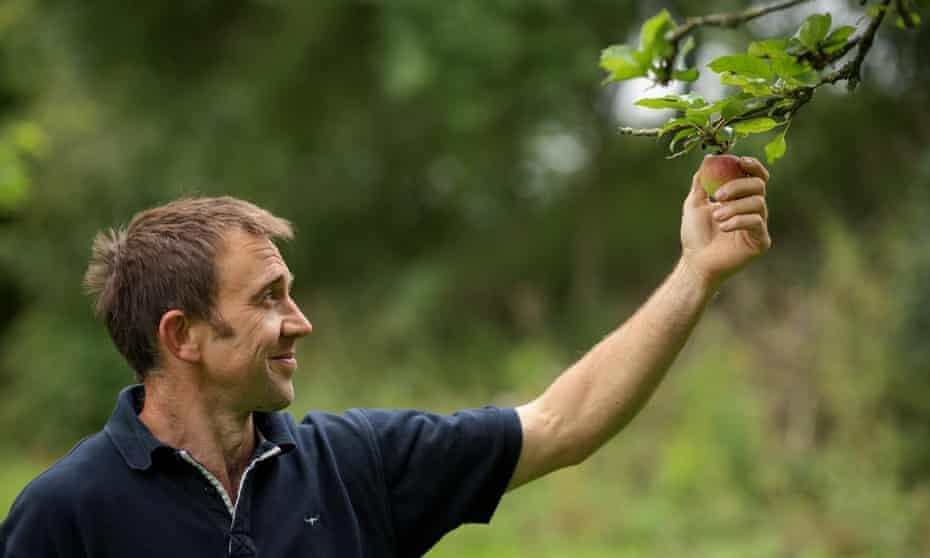 Richard Thomas picks an apple