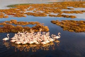 İzmir, Turkey. Flamingos on Çakalburnu lagoon, a coastal wetland on the southern side of the Bay of İzmir