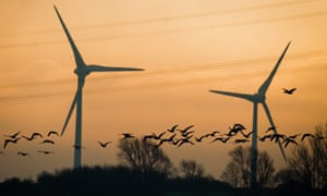 Grey geese fly past wind turbines
