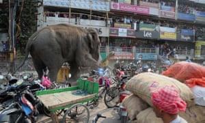 Wild elephant in Siliguri, Benga
