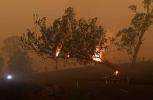 A burning gum tree is felled