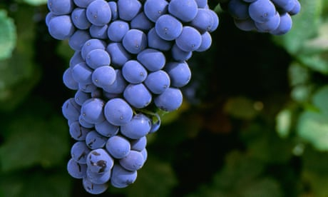 Can't afford Burgundy pinot noir? Try these…