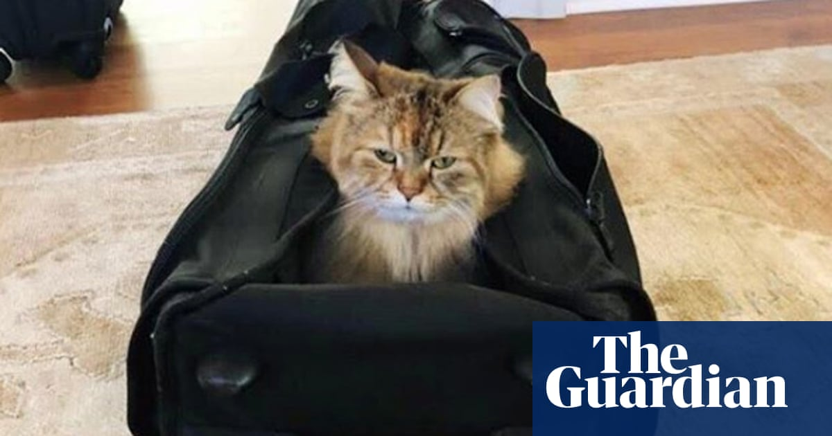 Cat lovers question ethics of Nicole Kidman hiking with pets in backpack