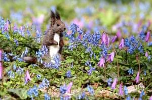 A Hokkaido squirrel