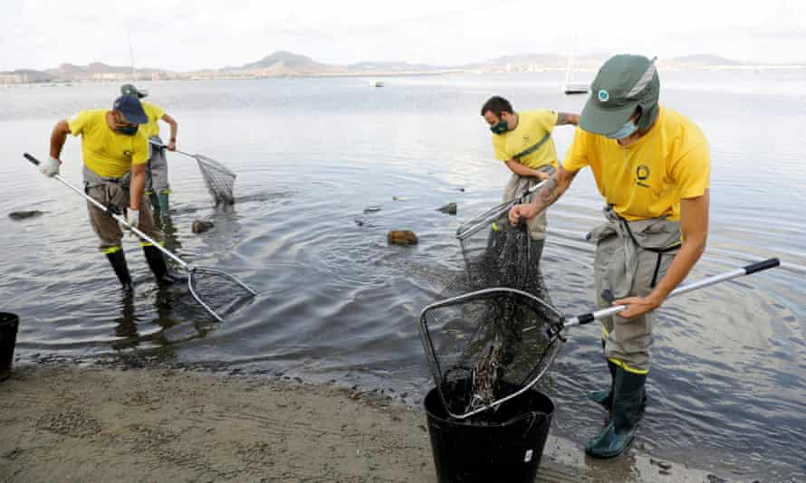 Workers collecting dead fish