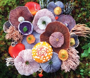 Vibrant Mushroom Arrangements in the Salish Sea, between British Columbia and Washington State as photographed by Jill Bliss.