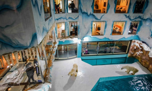 Chinese hotel with polar bear enclosure opens to outrage