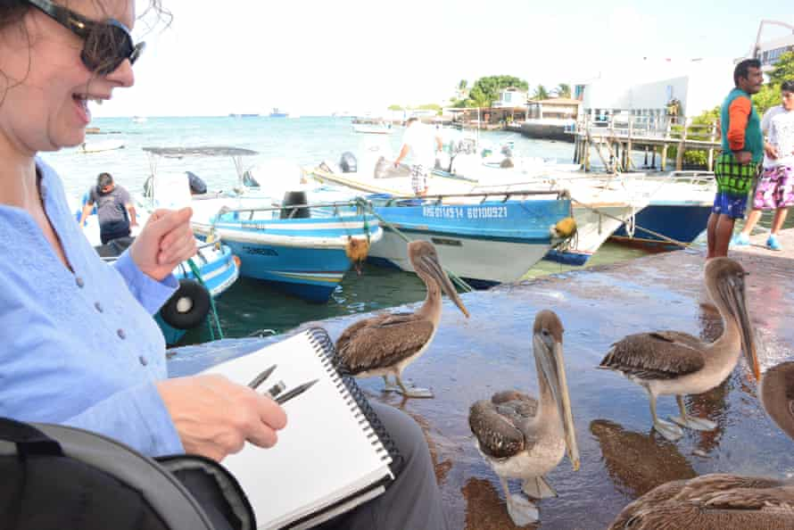 Sketching pelicans on an Art Safari holiday in the Galápagos Islands