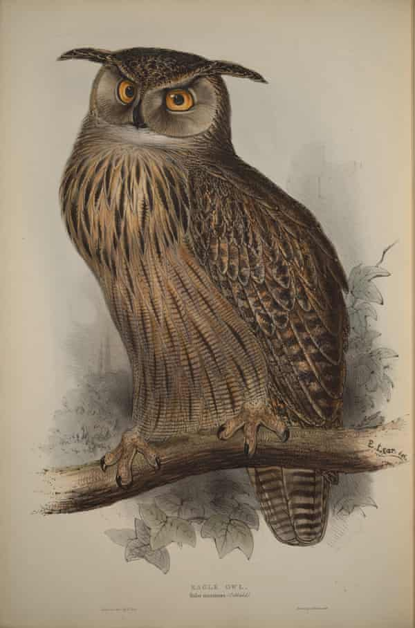 Lihograph of an eagle owl sitting on a branch