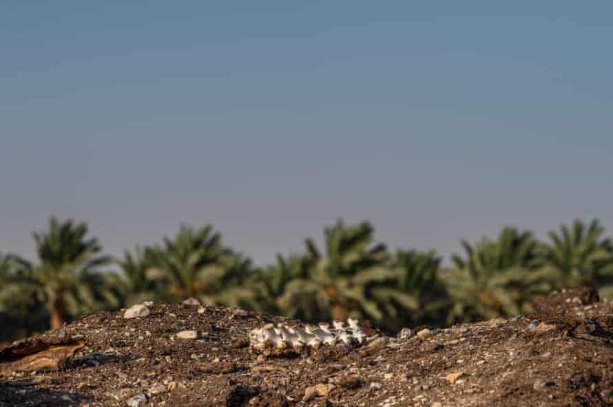 Skeleton at a quarantine dump site in Israel