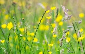 Muker flower meadows in full bloom in the Yorkshire Dales, UK