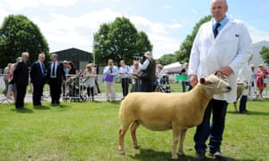 Michael Gove admires a sheep at faming show in Worcesterhsire