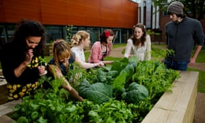 sowing the seed students from the urban gardening society at manchester metropolitan university
