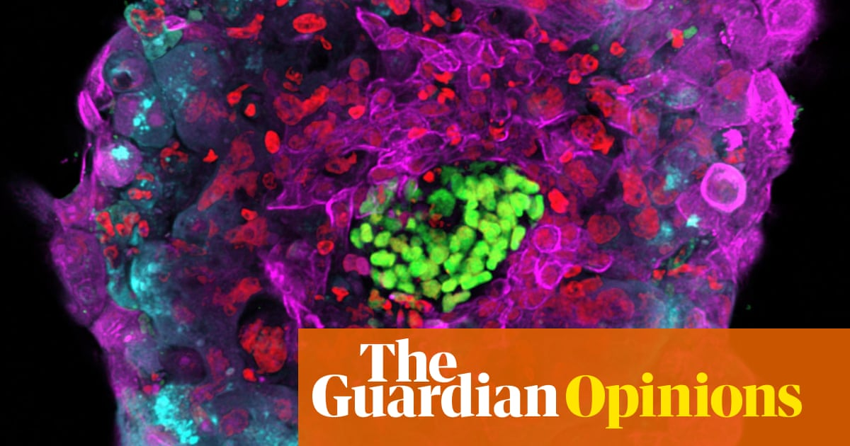 the morality of embryo use