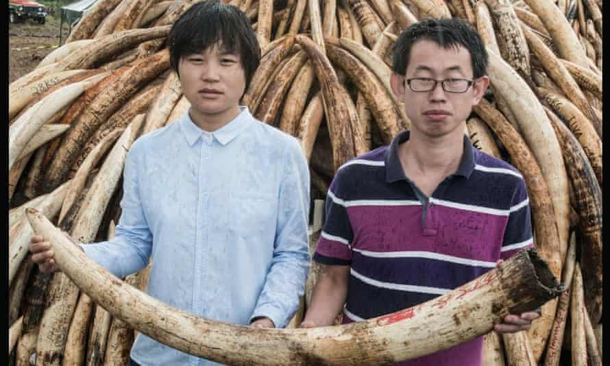 Chinese tourists at the ivory burn site in Nairobi National Park, holding a piece of ivory from Kenya's stockpile of 105 tonnes to be burned there on 30 April 2016.