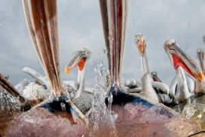 A pool ingeniously filled with clear water in the middle of Lake Kerniki in Greece enabled this shot of feeding pelicans.