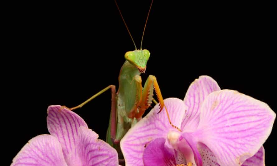 'I see it,' he said. 'You are the female praying mantis, devouring her mate.