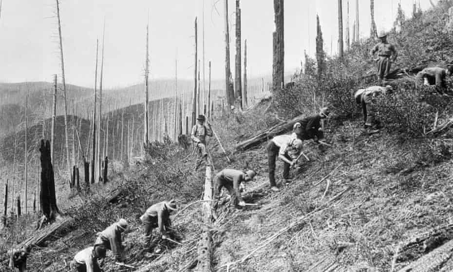 A group of Civilian Conservation Corps members plant seedlings on a clear-cut hillside in Oregon.