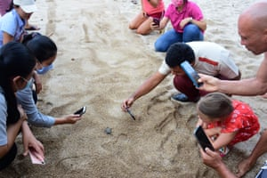 Baby turtles draw an admiring crowd