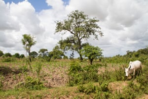 Smallholder farmers and pastoralists have moved in huge numbers to the valley, cutting down forest as they go.