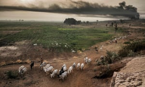 Pastoralists move while their cattle graze near some farms in the outskirts of Sokoto district in north Nigeria.