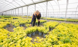 Horticulturist Christine Haseler at Joseph Rochford Gardens 40 acre nursery in Hertfordshire