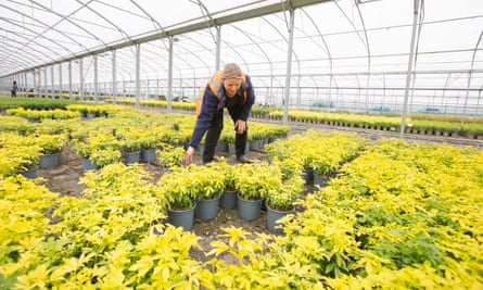 Horticulturist Christine Haseler at Joseph Rochford Gardens 40 acre nursery in Hertfordshire