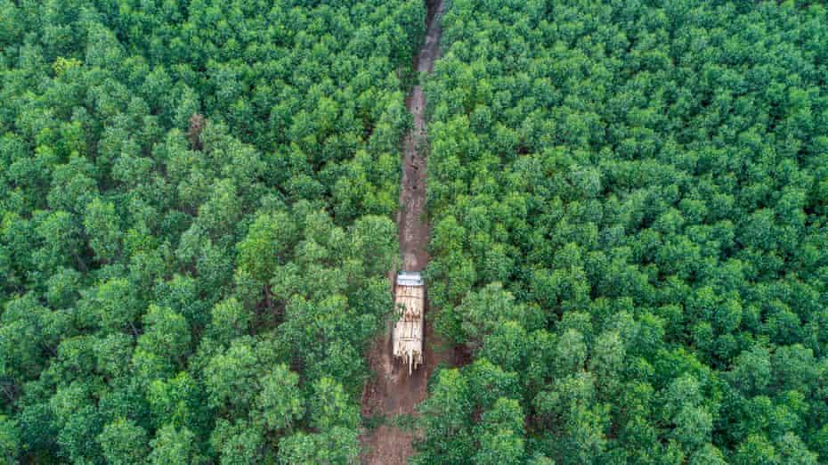 A truck travels through the plantation in Phú Lộc