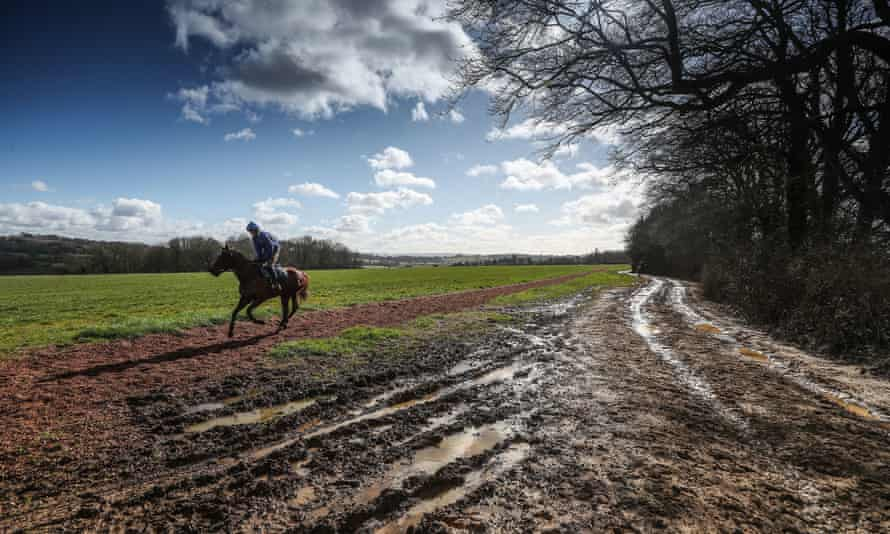 A racehorse at exercise near Colin Tizzard's stable, where Lostintranslation has been impressing in his work.