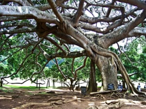 The Royal Botanic Gardens in the Kandy, Sri Lanka