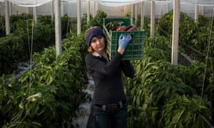 Romanian women, such as Nicoleta Bolos, work in terrible conditions in Ragusa greenhouses and many are abused by the owners.