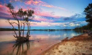 Eco heroes: mangroves at Yamba, Australia.
