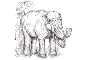 Platybelodon grangeri were shovel-tusked elephants that lived in China 15 to 11 million years ago. They stood little taller than a human