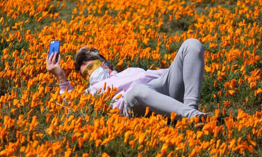 A mask-wearing selfie-taker enjoys the annual poppy bloom in California's Antelope Valley last week.