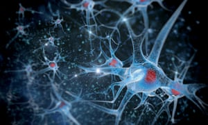 The researchers implanted into mice stem cells from that make fresh neurons in the brain. These cells are found in the hypothalamus in youth, but die off in later life.