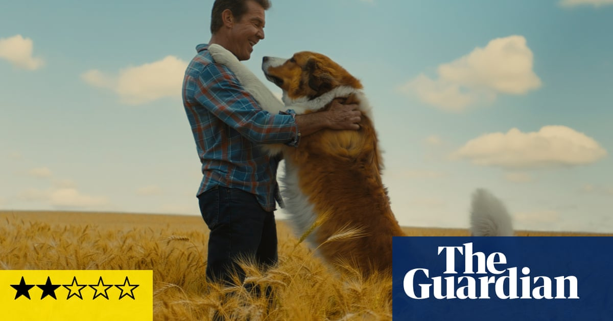 A Dog's Journey review – corny canine caper