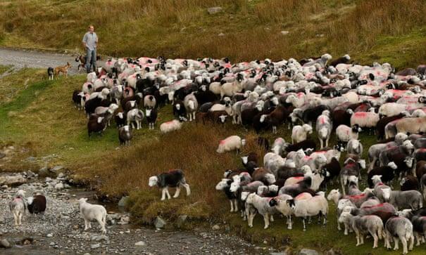 Goodbye – and good riddance – to livestock farming | George