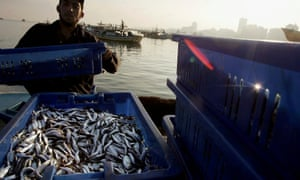 A Palestinian fisherman brings in the morning catch in Gaza City.
