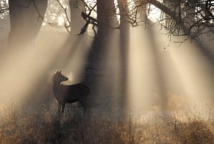 A deer is seen in the early morning light at Richmond Park in west London
