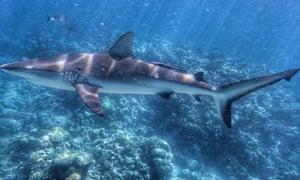 shark bites queensland fisherman as he tries to reel it in