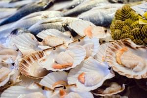 ScallopsFresh scallops on fish market,