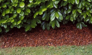 How To Mulch In Autumn Alys Fowler Life And Style The Guardian